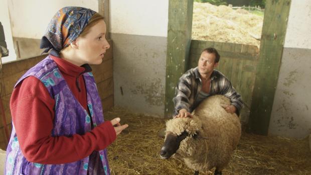Ein Bauer und sein Lieblings-Schaf - ein wirklich schönes Paar, aber wehe sie...